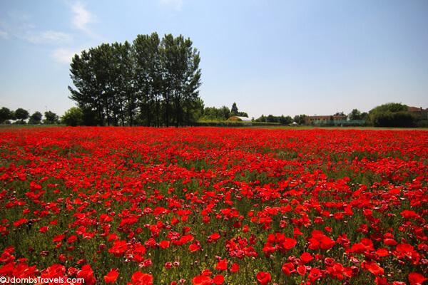 Jdombs-Travels-Poppy-Fields-2