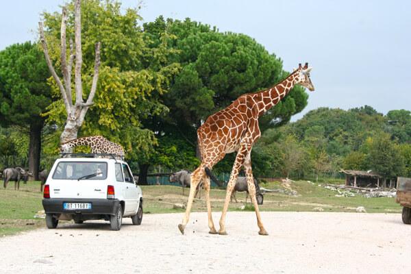 parco natura viva verona video tour - photo#15