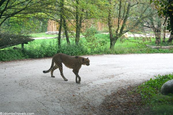 parco natura viva verona video tour - photo#16