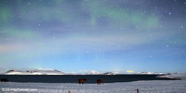 Icelandic horses like watching the Aurora Borealis dance too