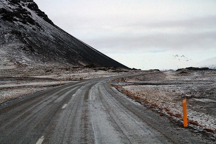 Reindeer in East Iceland