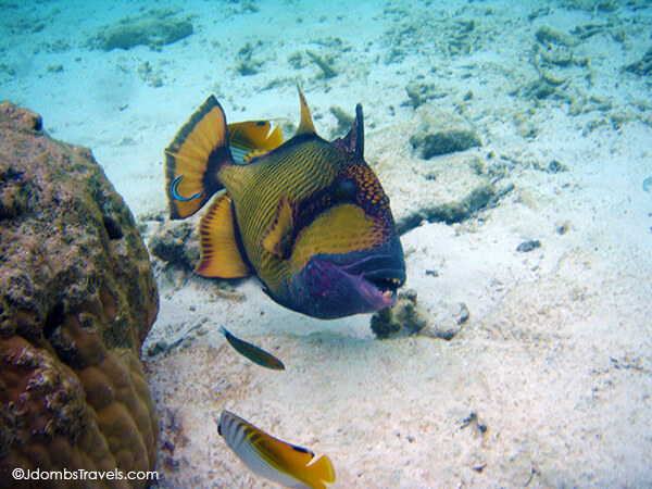 Maldivian Reef Fish