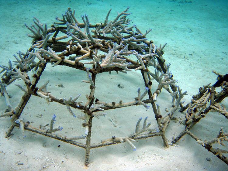 Anantara Kihavah Villas Maldives coral adoption program