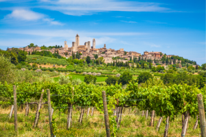 The view of San Gimignano with the village and towers on the hill from a vineyard nearby