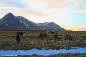An Icelandic Horse Riding Tour