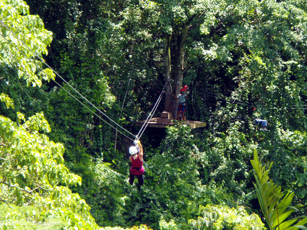 Antigua Rainforest Canopy Tour