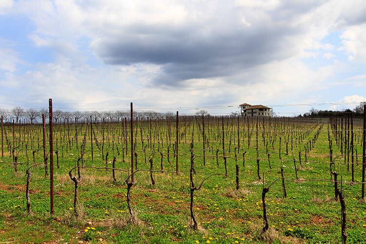 The bud break hasn't happened yet on this spring day gazing across Castelvecchio's vineyards