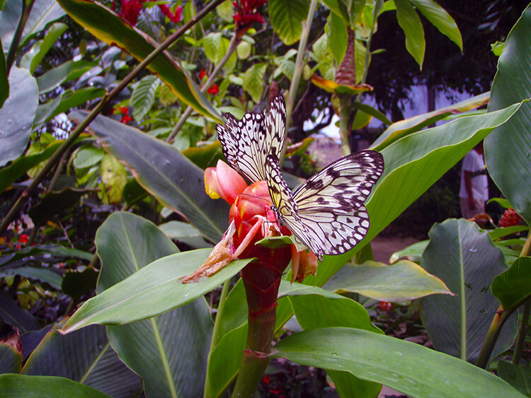 Saint Maarten Butterfly Farm