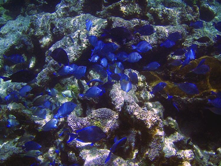 Snuba Saint Maarten