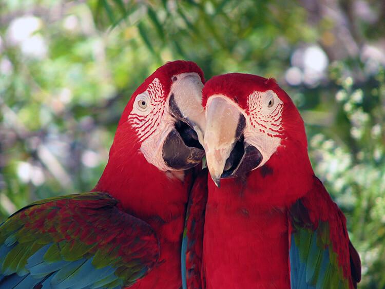 Sint Maarten Zoo