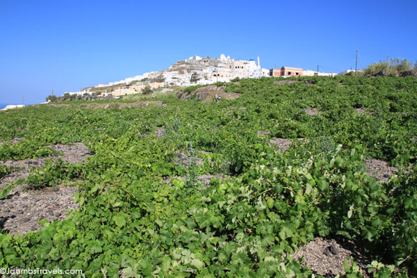 Vineyards on Santorini