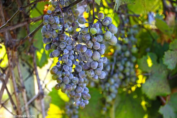 Wine Roads of Istria
