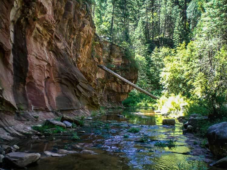 Tree lined stream wanders through the West Fork of Oak Creek Canyon near Sedona Arizona