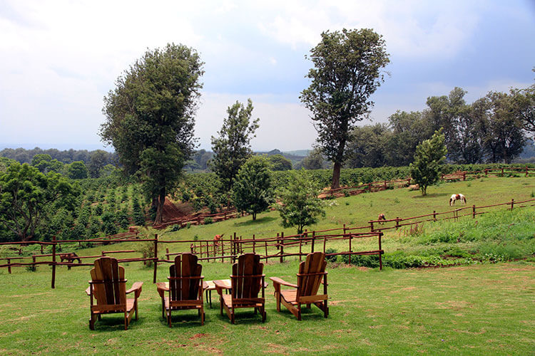 Horses graze in a pasture above a coffee plantation and four Adirondack chairs are set looking at the view at The Manor at Ngorongoro