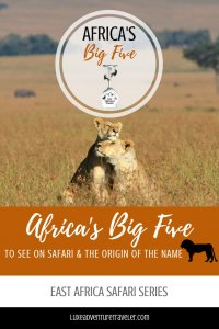 Africa's Big Five Pinterest Pin