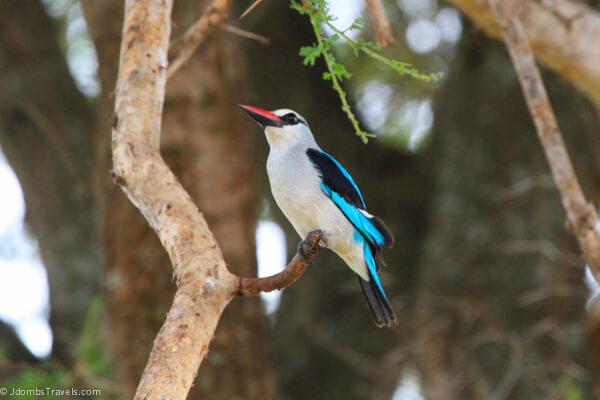 Birds in Tarangire National Park