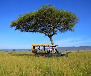 Jennifer and her Angama Mara guide identifying a bird in a book together in the Angama Mara safari vehicle while parked under a tree in the Masai Mara