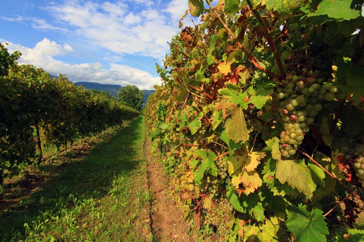 Friuli Venezia Giulia Strada del Vino