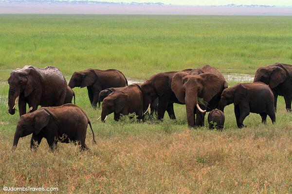 A herd of elephants in Tarangire National Park