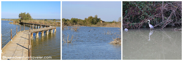 Camargue nature reserve