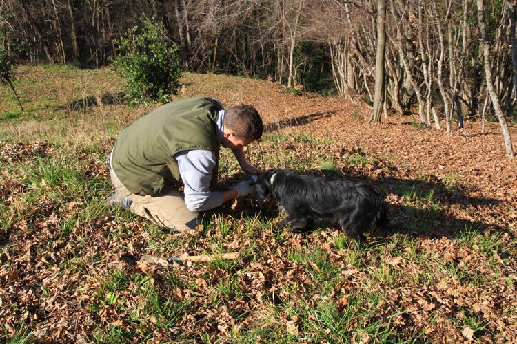 Karlic Truffle Hunting