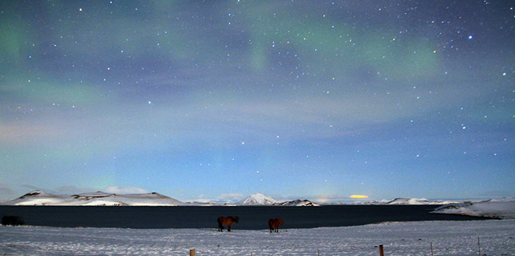 Very Faint Northern Lights Over Three Icelandic Horses Grazing Along Lake  Myvatn, Iceland