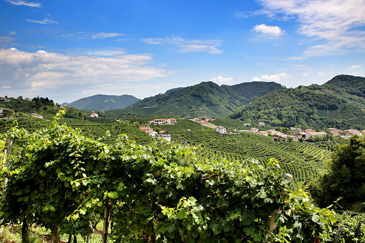 View of the rolling Prosecco vines from Toffoli