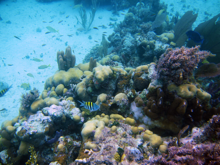 Snorkeling on the Rose Island reef with colorful reef fish