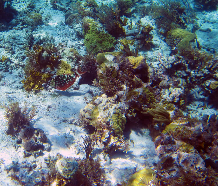 Brendal's Dive Center