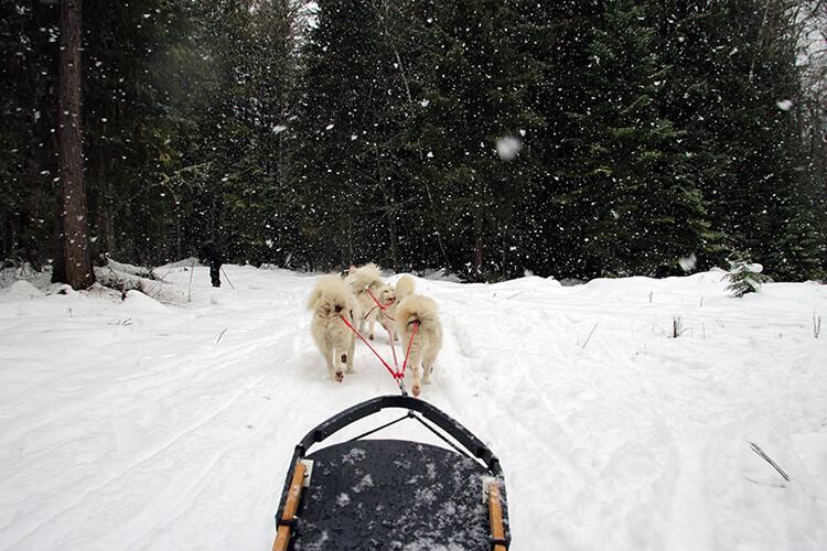 Dog sledding Base Camp Big Fork