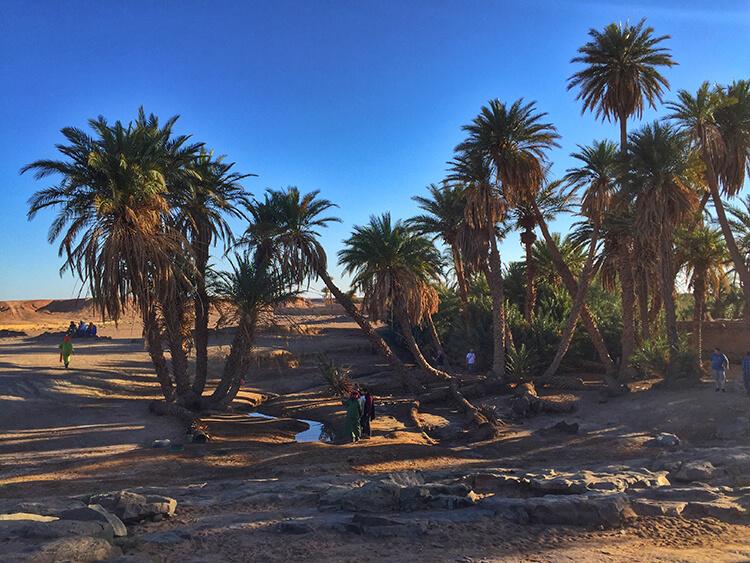 Oasis Sahara Desert