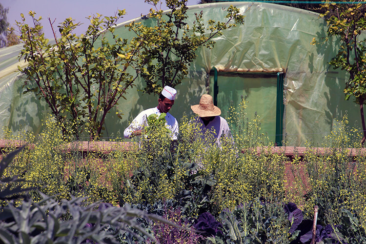 Mandarin Oriental Marrakech Organic Vegetable Garden
