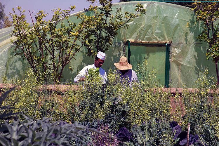 Mandarin Oriental Marrakech Organic Vegetable Garden