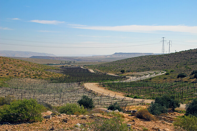 Negev Wine Route