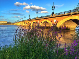 Lavender planted and the Pont du Pierre glows golden at sunset