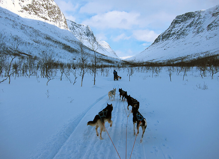 Dog sledding in the Lyngen Alps in Tromso, Norway