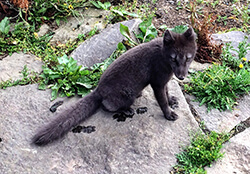Arctic Fox Center, Westfjords, Iceland