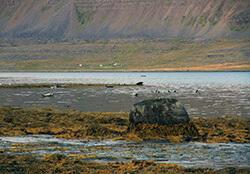 Hestfjörður, Westfjords, Iceland