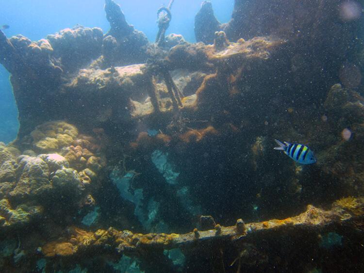 Snorkeling in Coron, Philippines