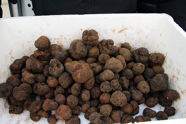Professional Truffle Market Richerenches