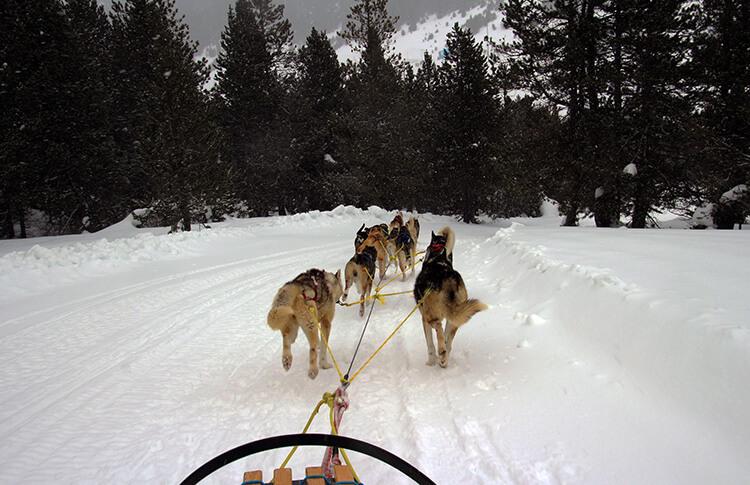 Grandvalira dogsledding