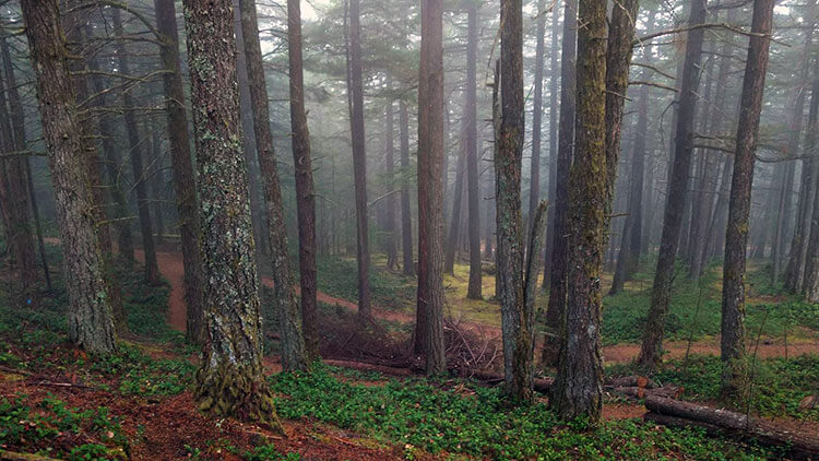 Fog and mist in the forest at Moran State Park