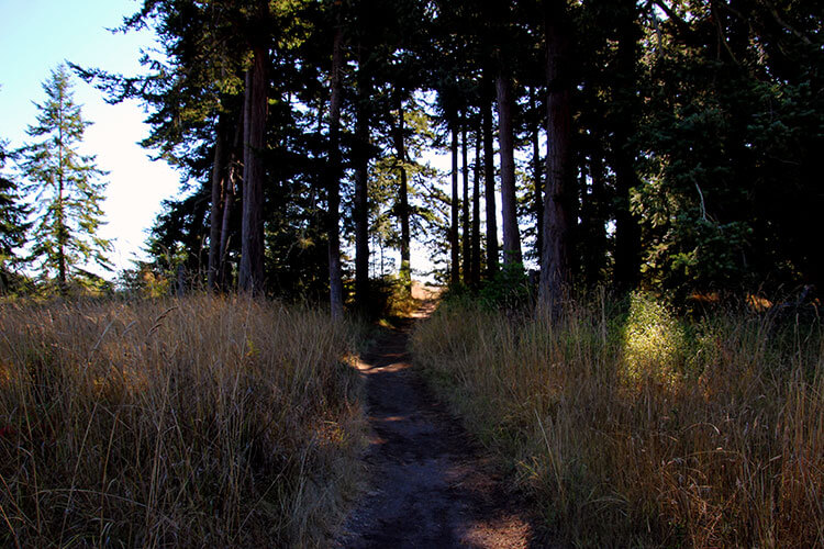 A trail through the pine trees at American Camp