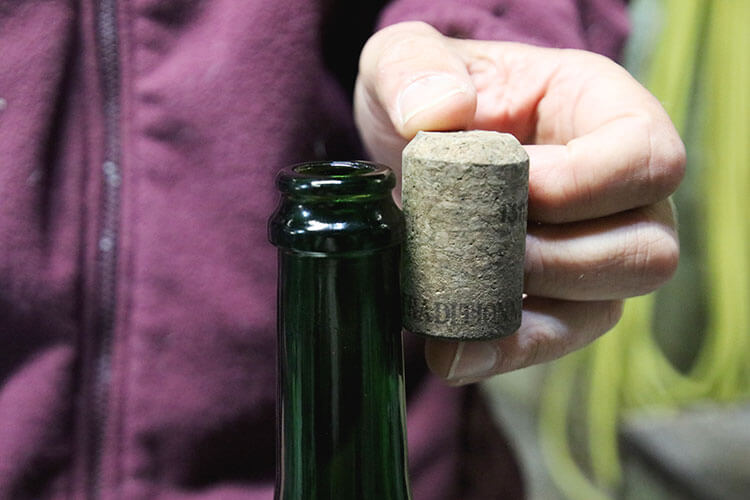 A champagne cork at its size of 31mm before it has been compressed to fit in the champagne bottle