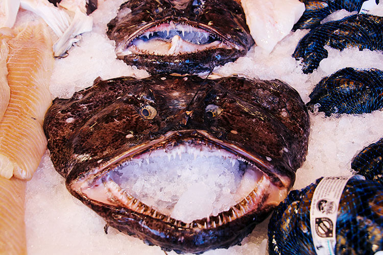 A whole monkfish with it's eyes and mouth open is nestled in ice at the Bergen Fish Market