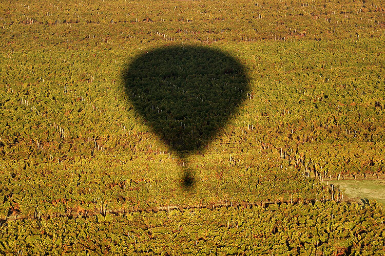 Our hot air balloon's shadow on the vineyard as we get ready to land in Saint-Émilion