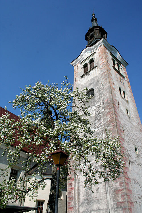 The 54-meter high bell tower with a tree with its spring buds in the shadow of the tower on Bled Island