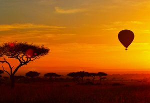 A hot air balloon floats at sunrise with acacia trees silhouetted black against an orange sky at sunrise in the Masai Mara