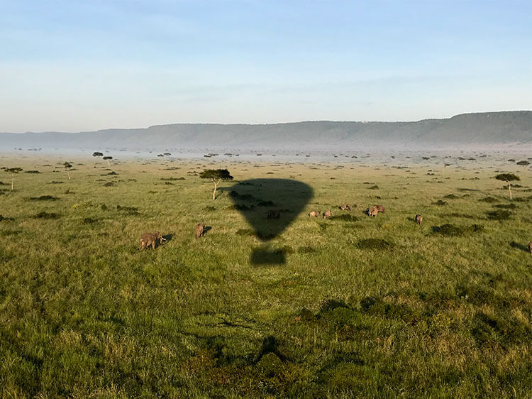 The hot air balloon's shadow passes over a herd of elephants in the Masai Mara