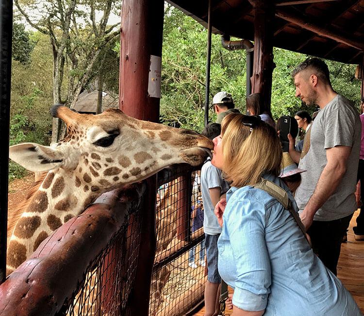 Jennifer getting a kiss from a giraffe at the Giraffe Centre
